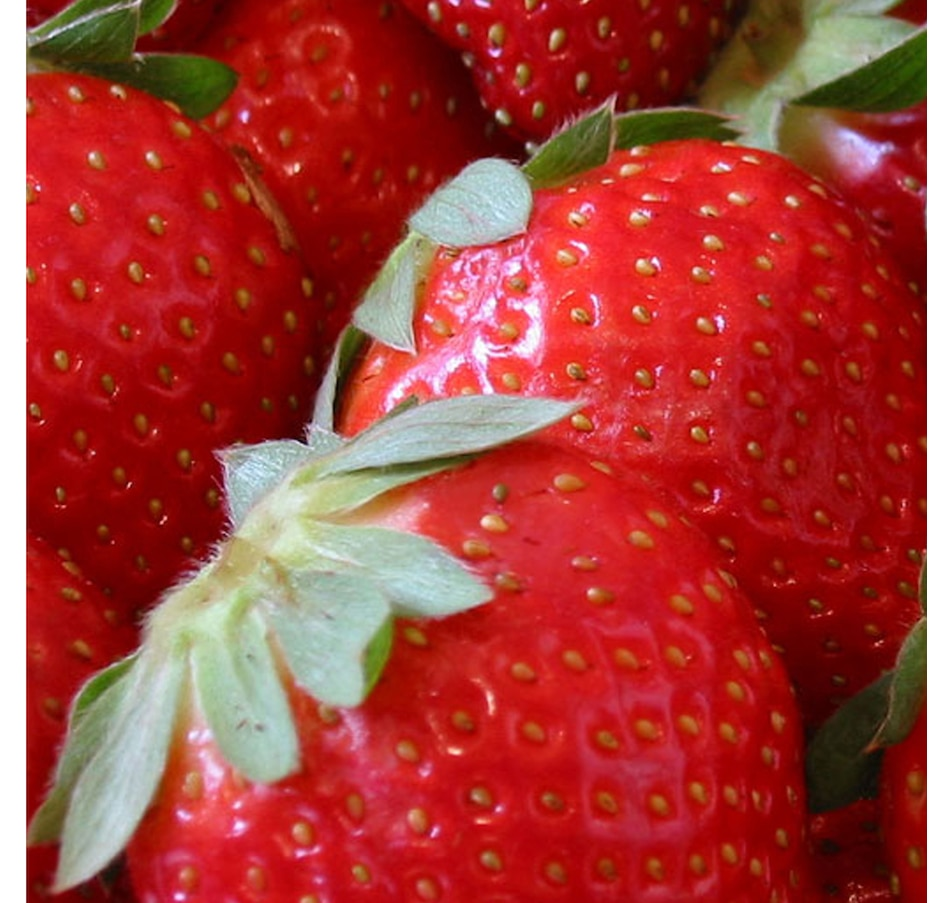 Image 614686.jpg , Product 614-686 / Price $17.95 , Botanus Honeoye Strawberry from Botanus on TSC.ca's Home & Garden department