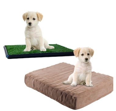 PAW Dog Bed and Puppy Potty Trainer Set