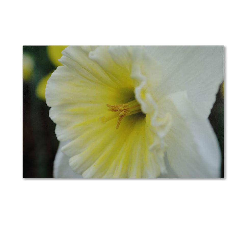 Buy Trademark Fine Art Monica Fleet \'Vitality\' Canvas Art - Home ...
